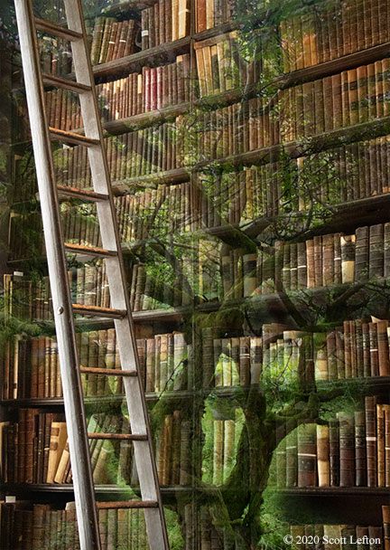 A tall bookshelf, extending beyond the view, with a ghostly tree twisting and growing up through the bookshelf and the books. A bookshelf ladder is in the foreground, ascending out of sight.