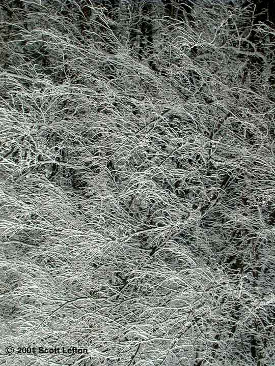 Black & white of tree branches coated with ice.